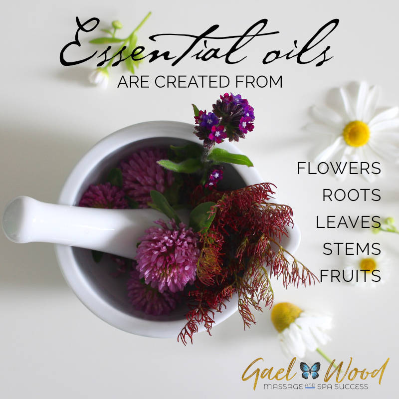 ACC-Essential-oils-created-from-flowers-roots-stems-leaves-fruits.jpg