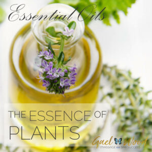 Free Aromatherapy Marketing Content: Essential Oils, the Essence of Plants